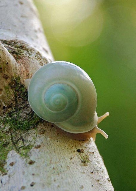 Snail Image By Daniel Jamison On Snails And Slugs Animals