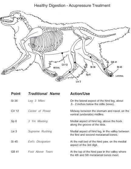 Firebert Acupuncture Acupressure Points On Dogs And Cats