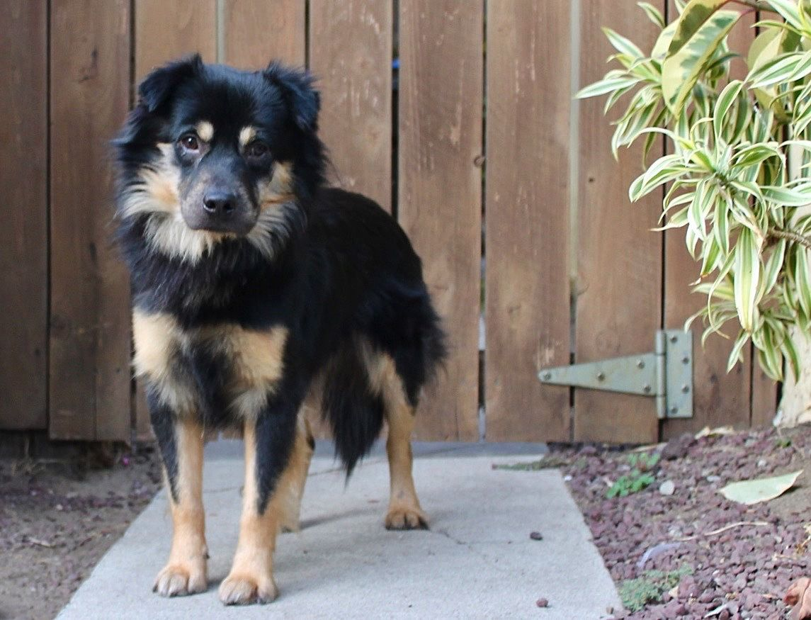 Adopt Sebastian 29lbs On Dogs Pets Los Angeles