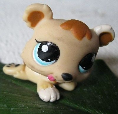 Check Ebay Deal Of Today Lps Littlest Pet Shop Littlest Pet Shop Little Pet Shop