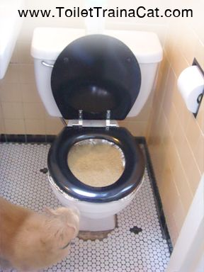 Toilet Train A Cat No Kit Using An Aluminum Roasting Pan And