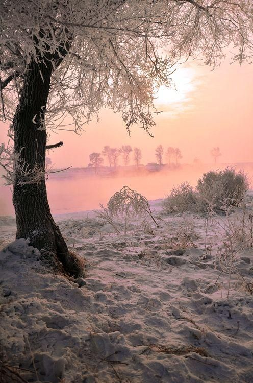 Daily Dozen Photos National Geographic Your Shot Winter Scenery Winter Scenes Nature Photography