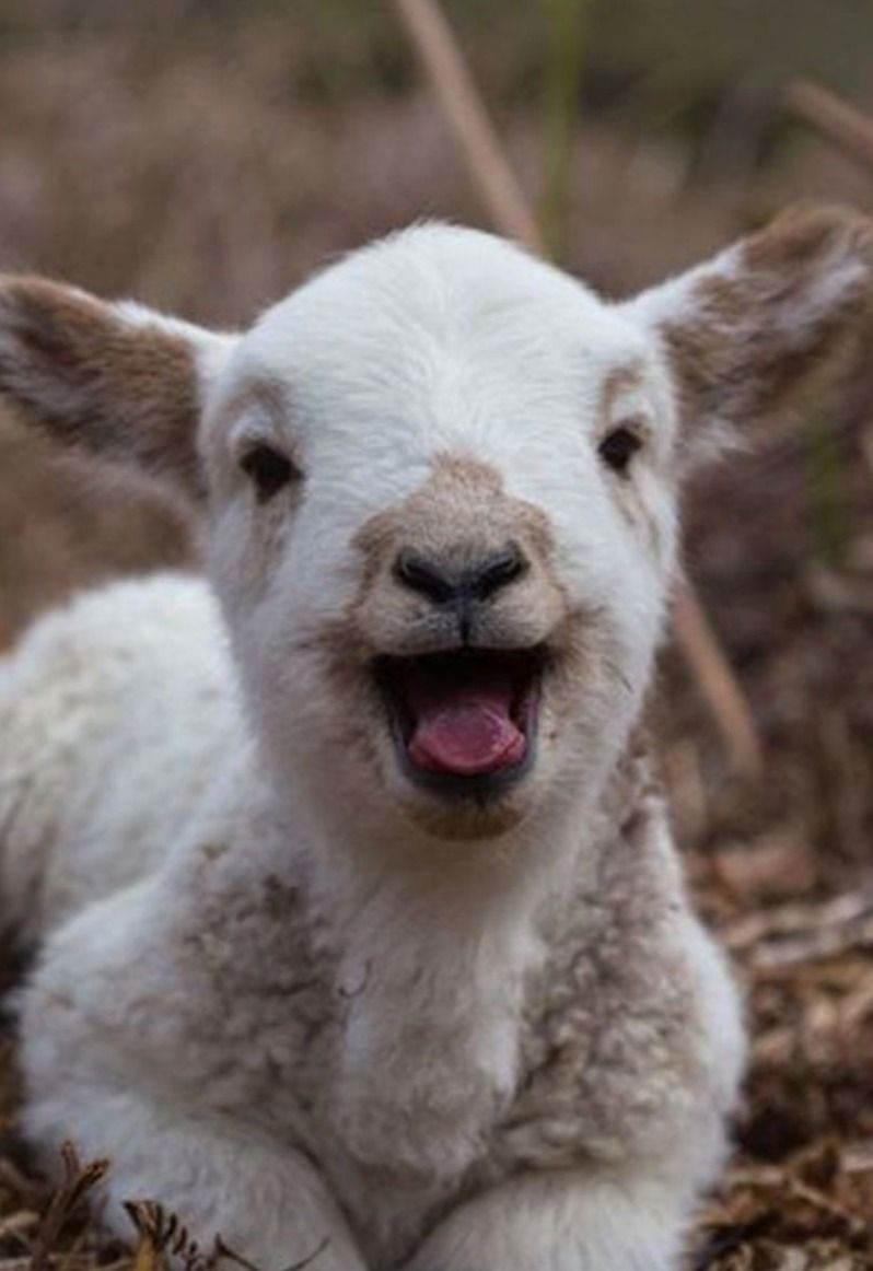 A Cute Baby Goat So You Start Saturday With A Smile In 2020