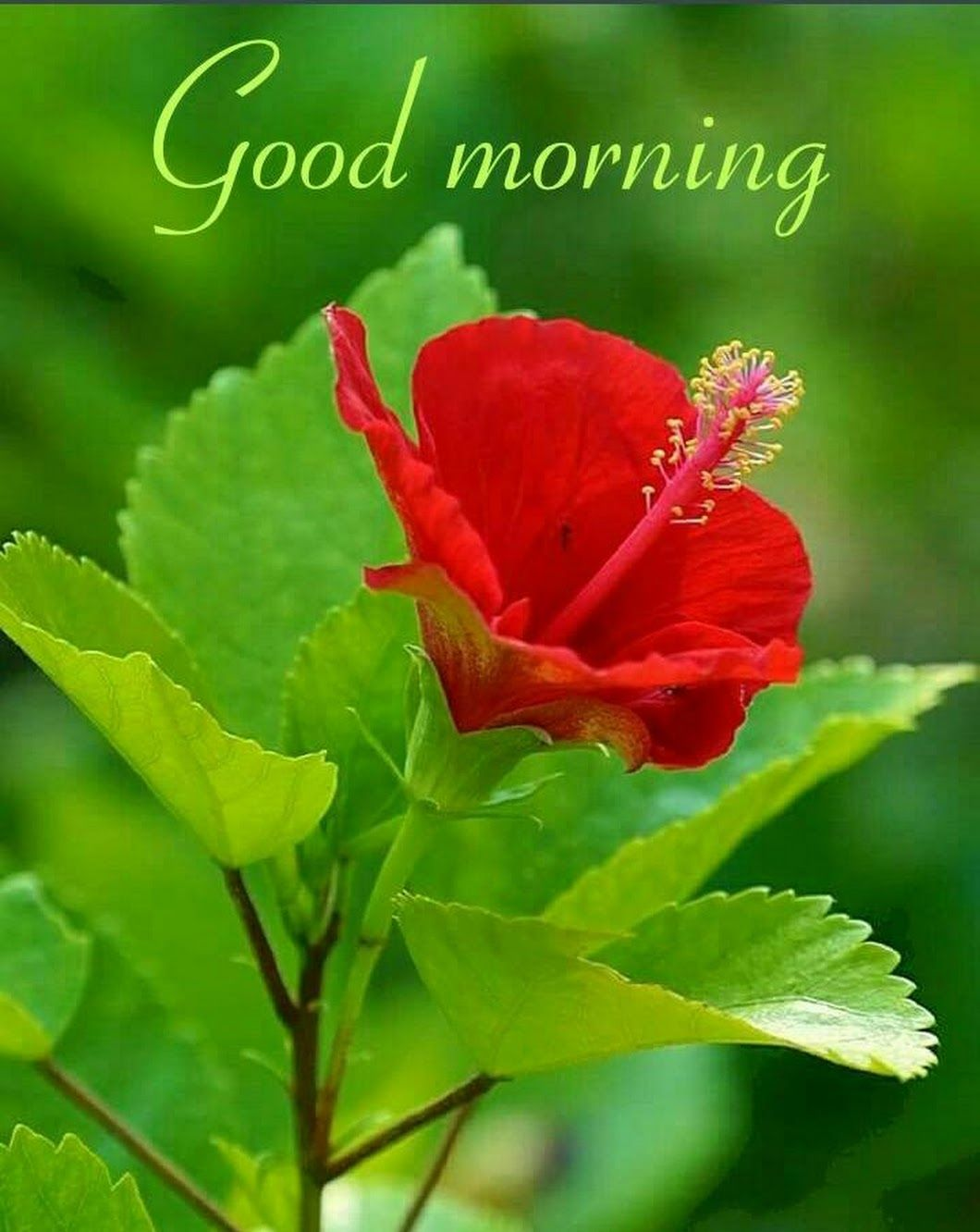 Sign In Good Morning Gif Good Morning Flowers Good Morning Images