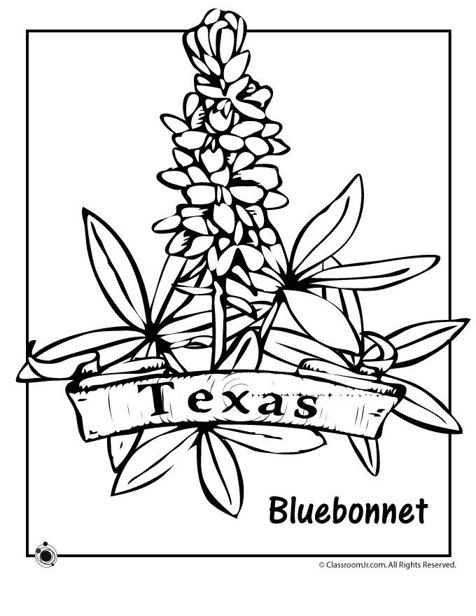 State Flower Coloring Pages Texas State Flower Coloring Page ...