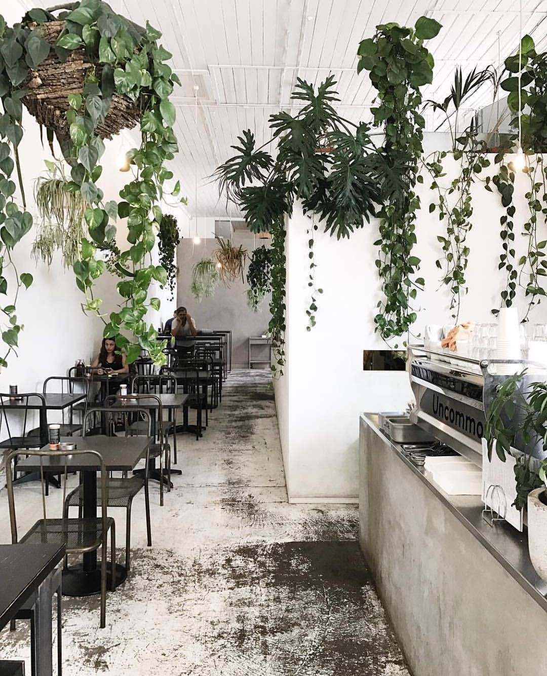 Cafe Plants Cafe Interior Design Cafe Plants Cafe Interior