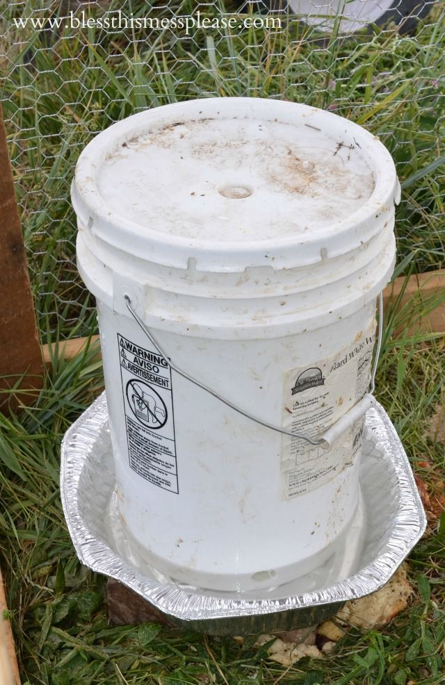 Diy Chicken Waterer And Feeder From 5 Gallon Buckets Muscovy Ducks
