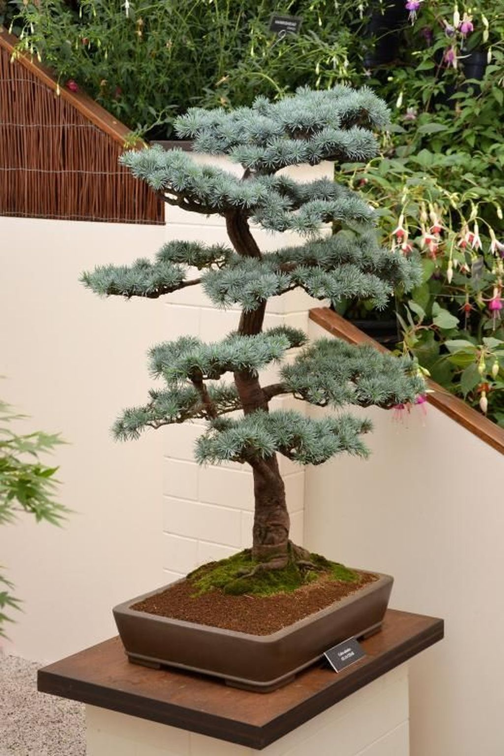 Achat Arbre D'intérieur 44 Stunning Bonsai Garden Ideas Best For Outdoor Decor Bonsaï Et