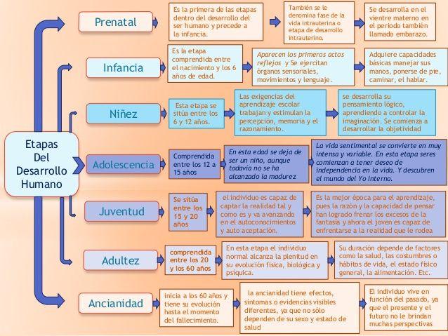 diabetes diferentes etapas de crecimiento