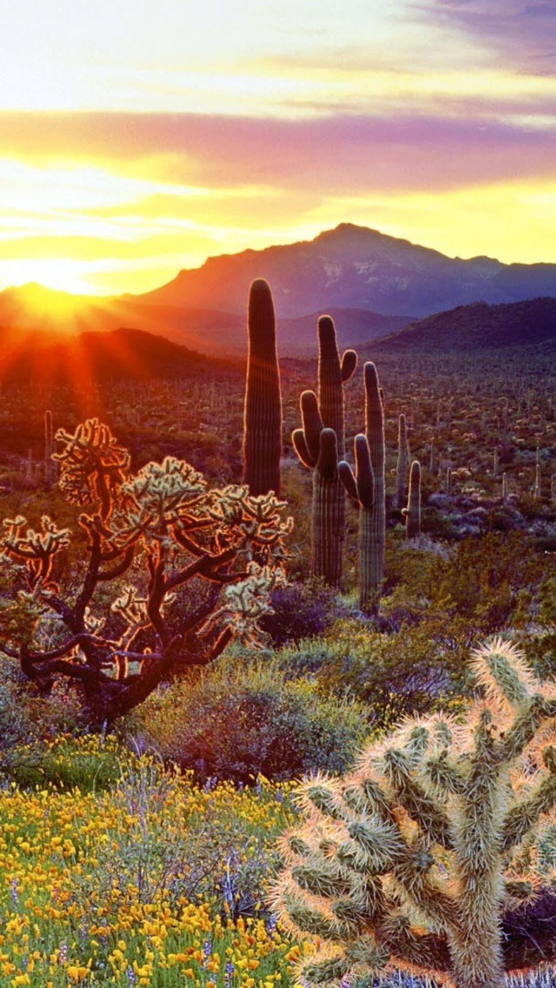 Orange Desert Sunset Sunset Wallpaper Beautiful Landscape Wallpaper Landscape Wallpaper