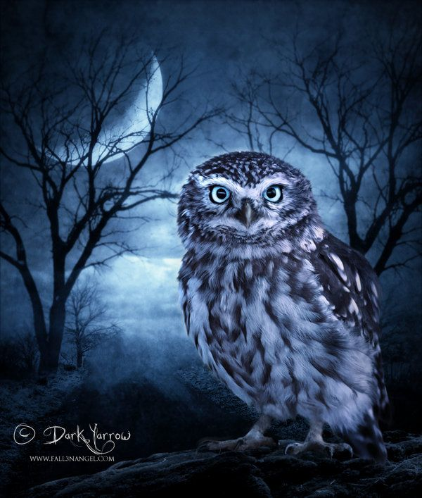 images of moonlight owls | Moon Owl by ~Dark-Yarrow on deviantART ...