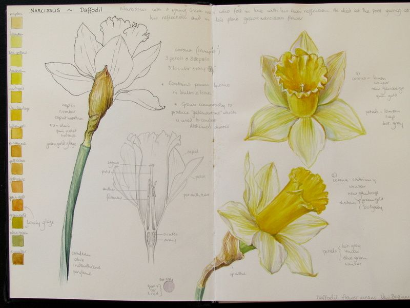 "comparison of daffodils and the prelude When i read the first few lines of ""daffodils"" by william wordsworth 2 responses to my analytical essay on ""daffodils"" by william wordswoth."