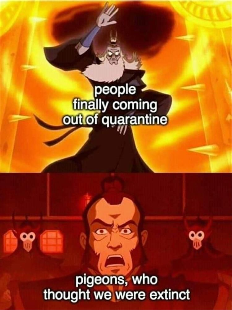 Afternoon Funny Meme Dump 35 Pics In 2020 Funny Pictures Funny Memes Avatar The Last Airbender Funny