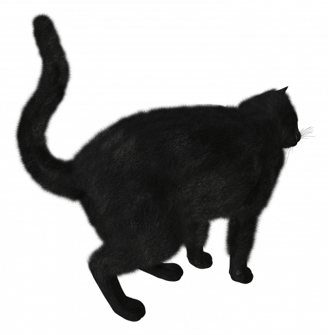 Black Cat Png Transparent Image Black Cat Pngget To Download Free Black Cat Png Vector Photo In Hd Quality Without Limit It Comes Cats Free Cats Black Cat