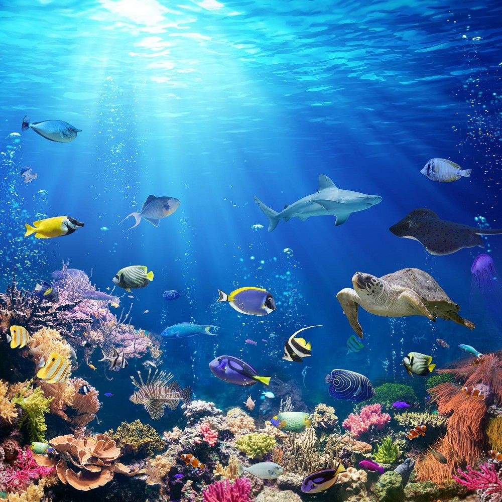 Toynk Under The Sea Ocean Puzzle For Adults And Kids 1000 Piece Jigsaw Puzzle In 2021 Underwater Wallpaper Underwater Painting Ocean Art Ocean underwater life fish corals algae