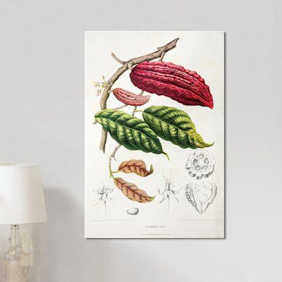 East Urban Home Hoola Van Nooten S Flowers Fruits And Foliage From Java Series Theobroma Cacao Cocoa Tree Tree Graphic Botanical Prints Graphic Art Print