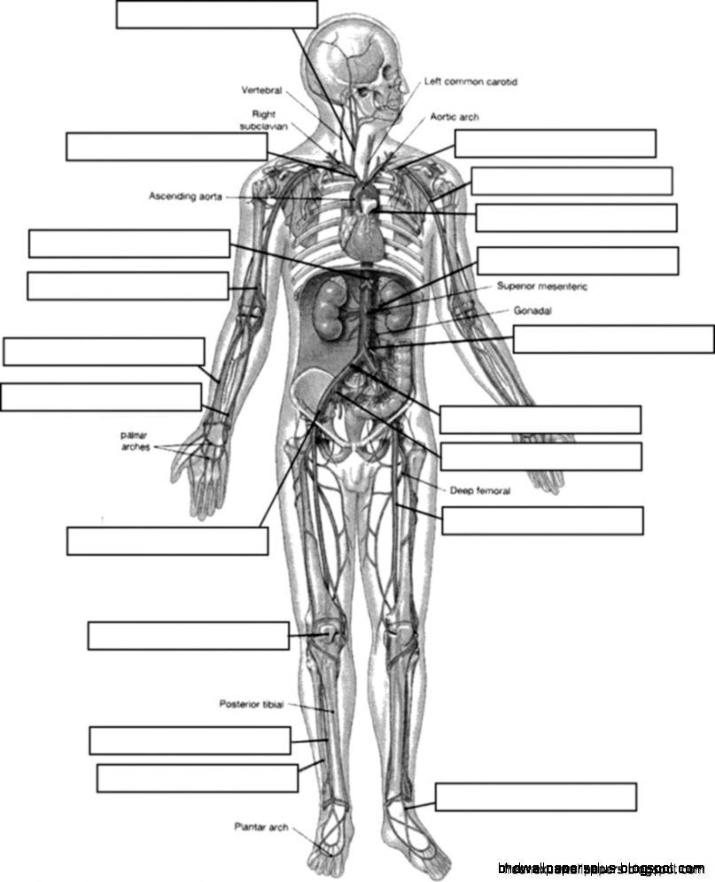 Anatomy And Physiology Coloring Workbook Answers Coloring Page