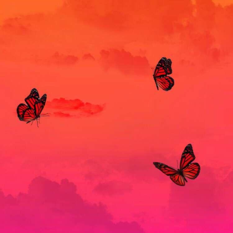 Red Butterflies Red Butterfly Butterfly Wallpaper Red Sky