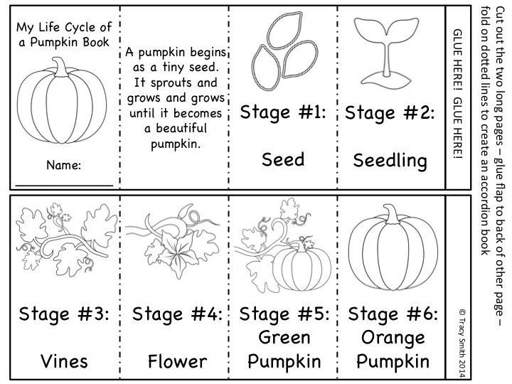 Pumpkin Life Cycle - Science Unit with Math and ELA activities ...