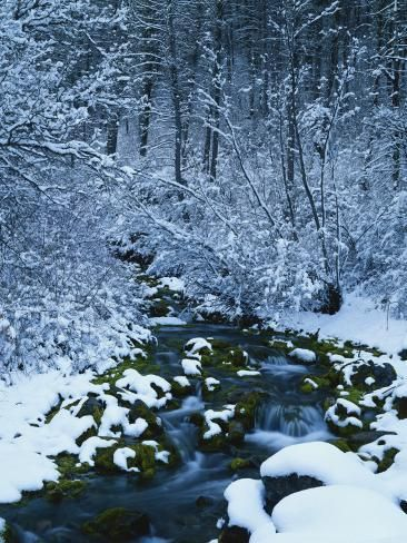 Photographic Print: Spring-Fed Creek in Winter, Wasatch-Catch National Forest, Utah, USA by Scott T. Smith : 24x18in #utahusa