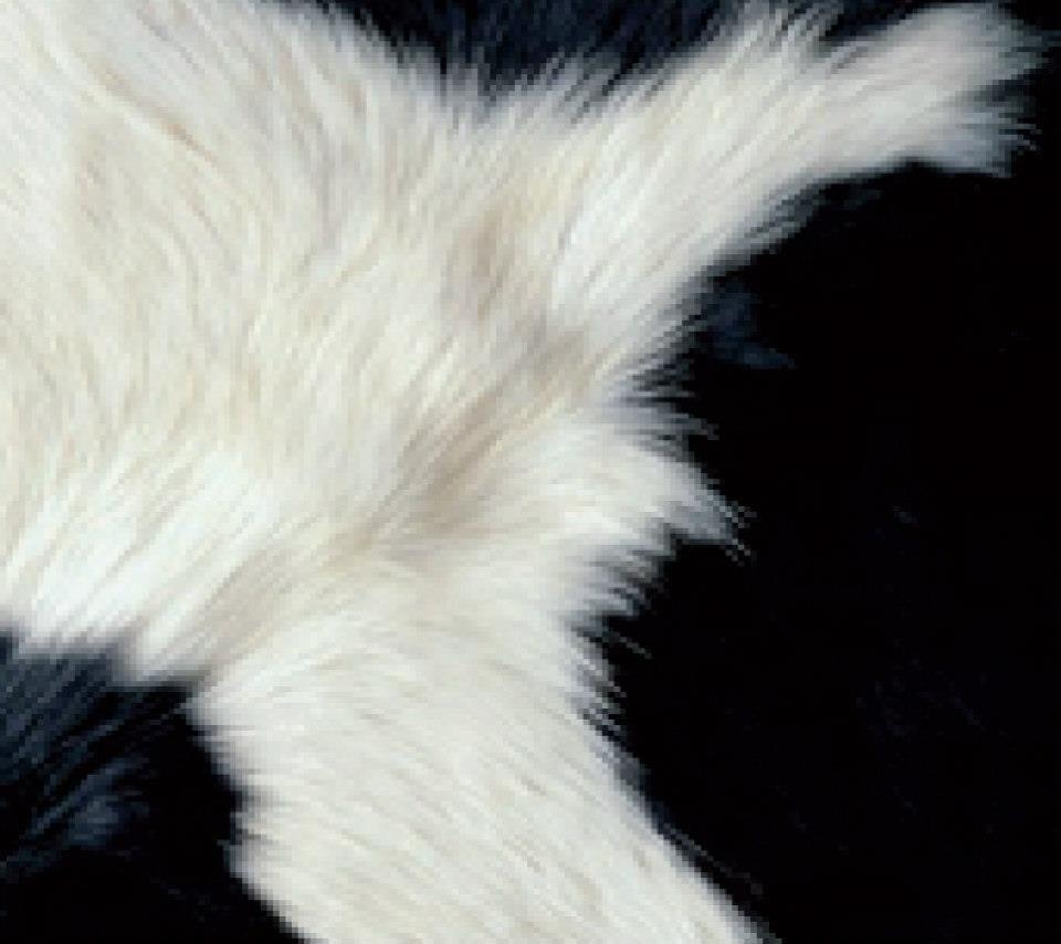 Cow / Skin Samsung Galaxy S3 I9300