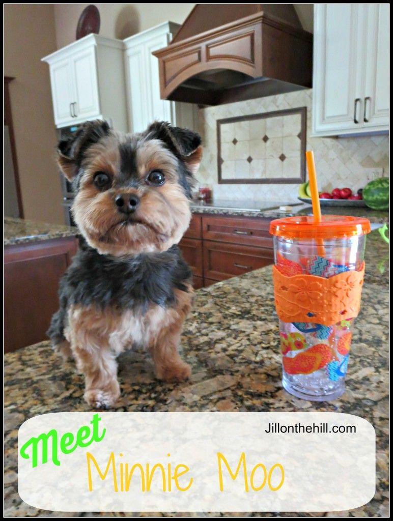 Meet Minnie Moo!  Jillonthehill.com