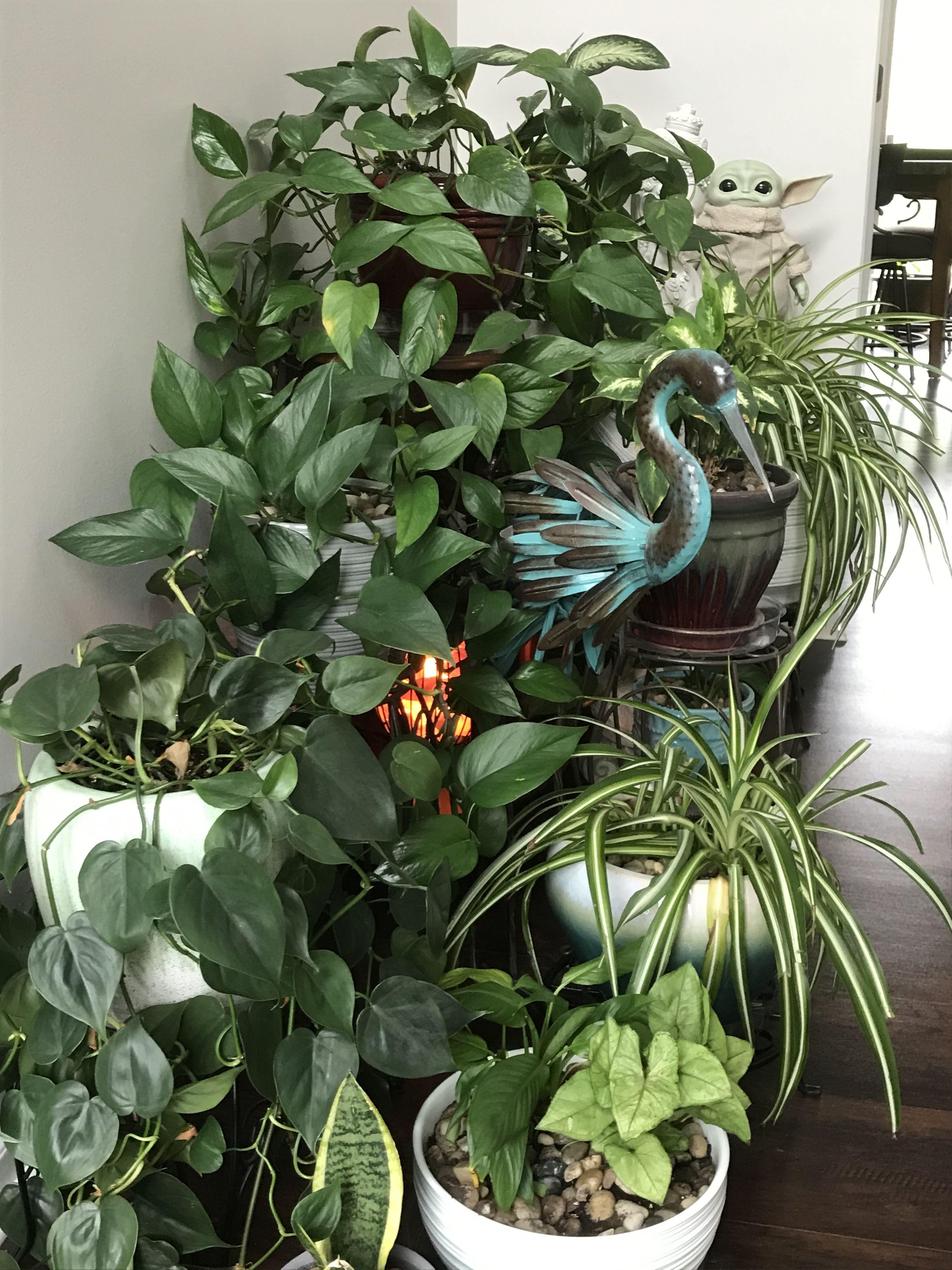 Baby Yoda Hiding In The Plants Plants Yoda Baby