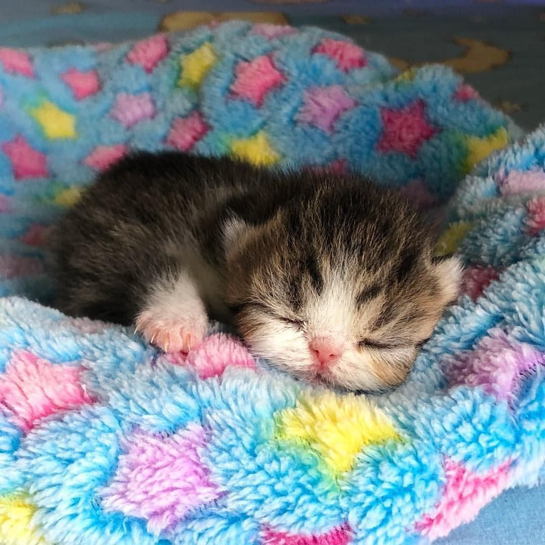 Pin By S C On Animals With Images Cats And Kittens Kittens