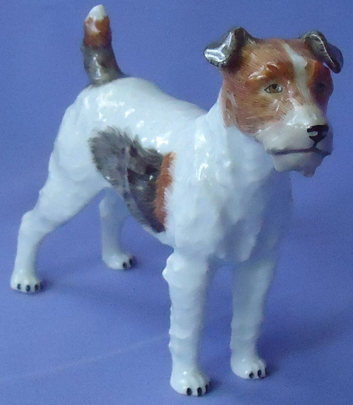 Dresden Fox Terrier Jack Russell Parsons Dog Germany 6\