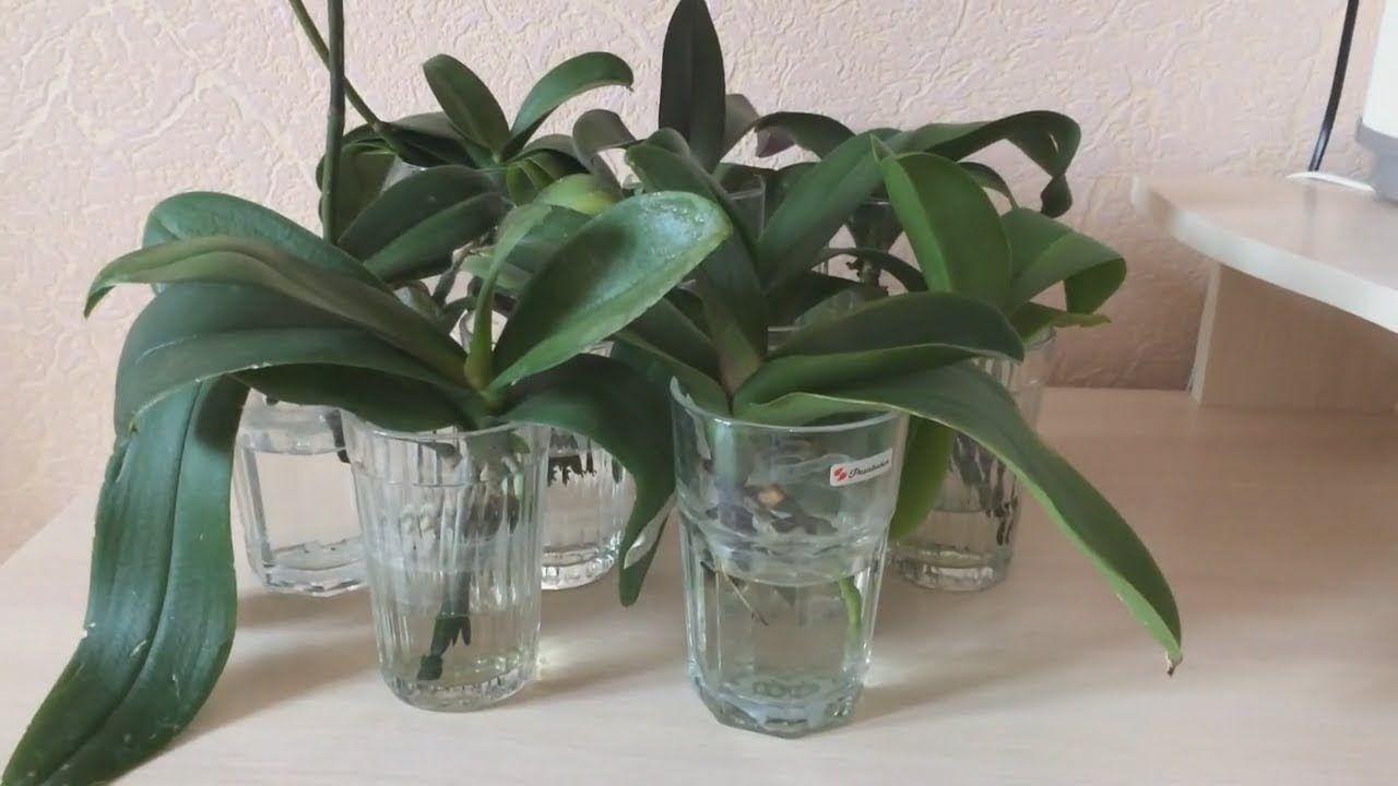 Тепличка для орхидеи своими руками фото 438