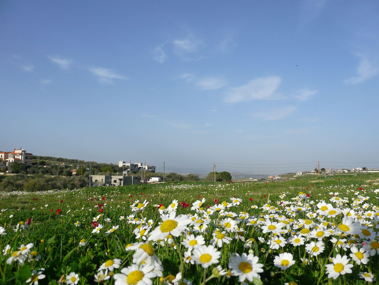 Springtime In South Lebanon South Lebanon Lebanon Landscape