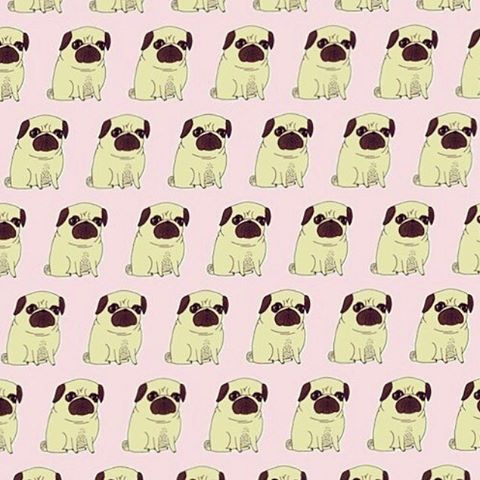 Pin By Angelica On Pugs Pug Life Pugs Animals