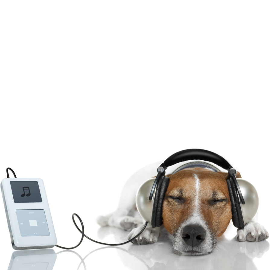 Canine Chart Countdown
