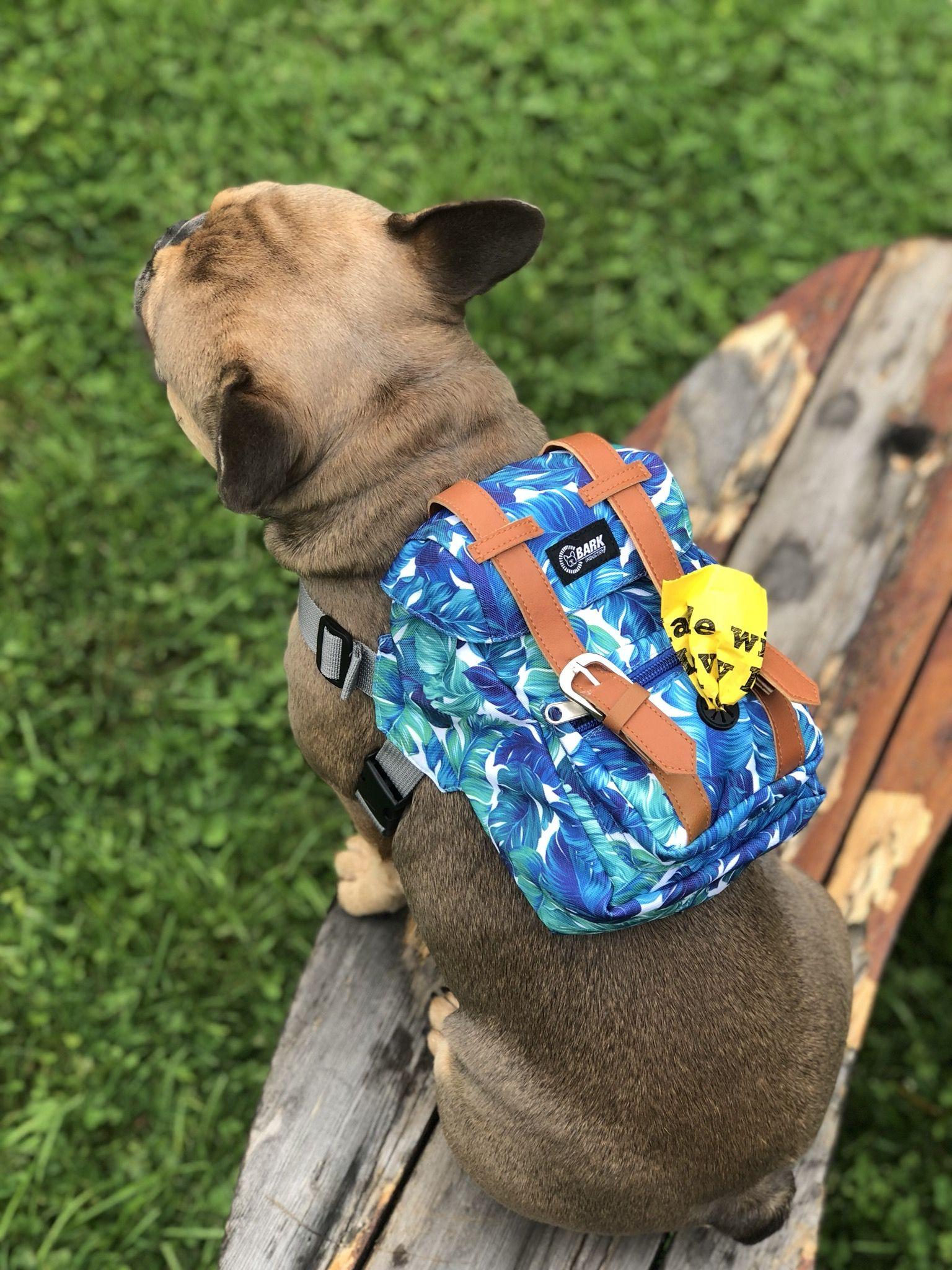 New Year Sale Hawaiian Polu Blue Dog Backpack With Harness