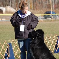 Bear Mountain Newf Club Draft Test Http Www Bearmountainnewf Org Newfoundlanders