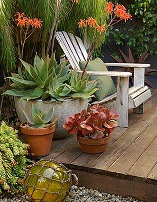 Best 25 desert backyard ideas on pinterest desert for Cool low maintenance plants