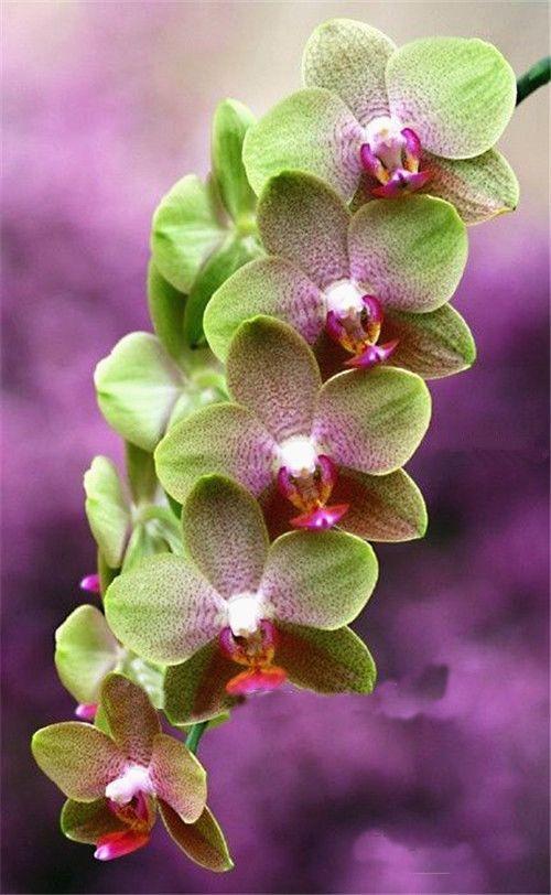 Rare Cymbidium Seeds 19 Different Seeds 100pcs Orchid Flower Flower Seeds Orchid Seeds