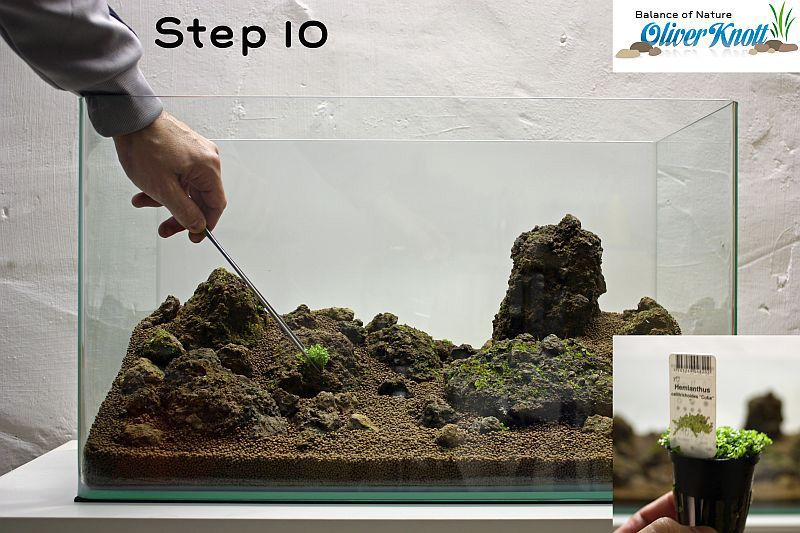 Setting up a planted aquascape: step by step instructions ...