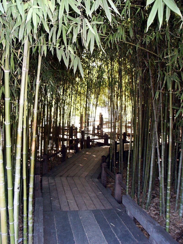 Huntington library japanese bamboo garden bridge 0053 for Garden design using bamboo