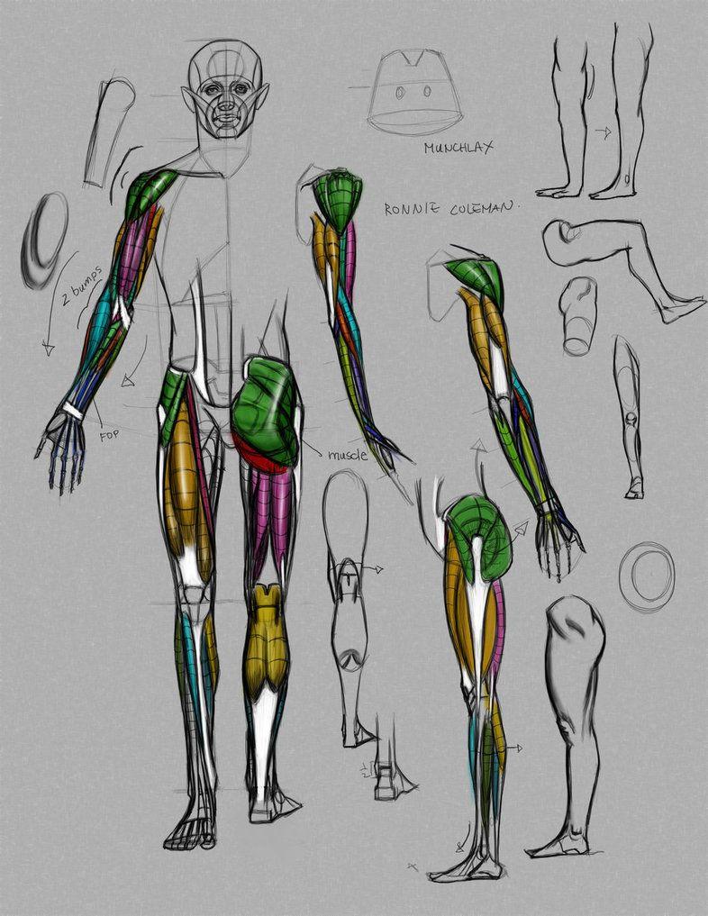 Anatomy Demo From Online Class By Funkymonkey1945 Anatomy