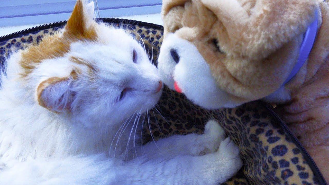 Pin By Pet Loverz World On Pet Funniez Cute Puppy Videos Little Live Pets New Puppy