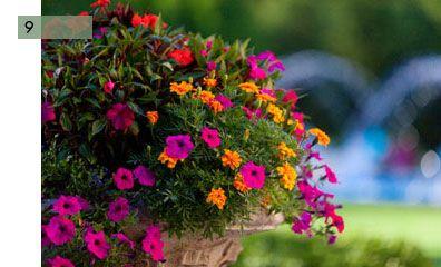 potee fleurie 9 impatiens petunia oeillets id es balcon jardin pinterest p tunias fleuri. Black Bedroom Furniture Sets. Home Design Ideas