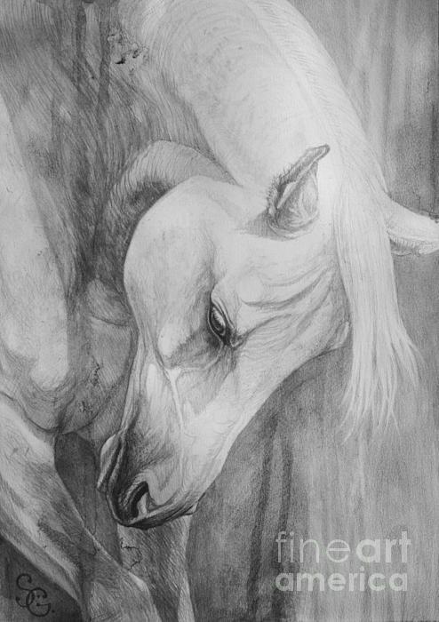 Arabian Gentleness by Silvana Gabudean - Arabian Gentleness Painting - Arabian…