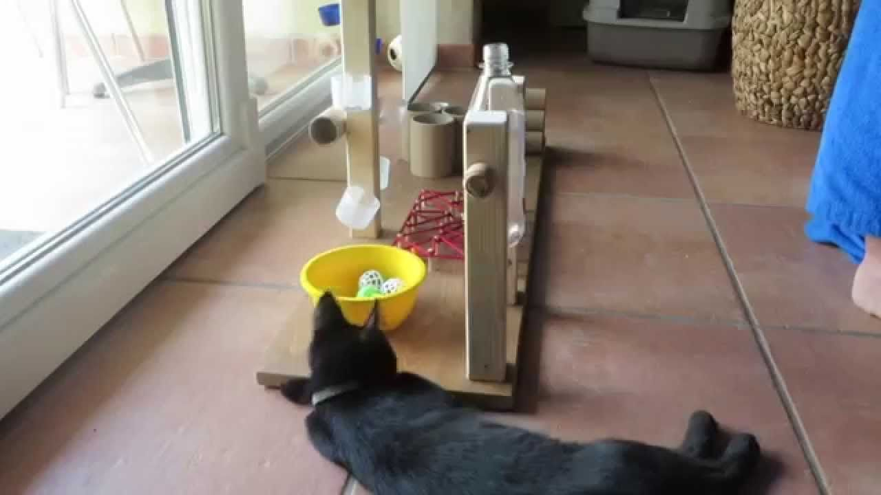fummelbrett de luxe f r fortgeschrittene fummel katzen funny cat viele sch ne. Black Bedroom Furniture Sets. Home Design Ideas