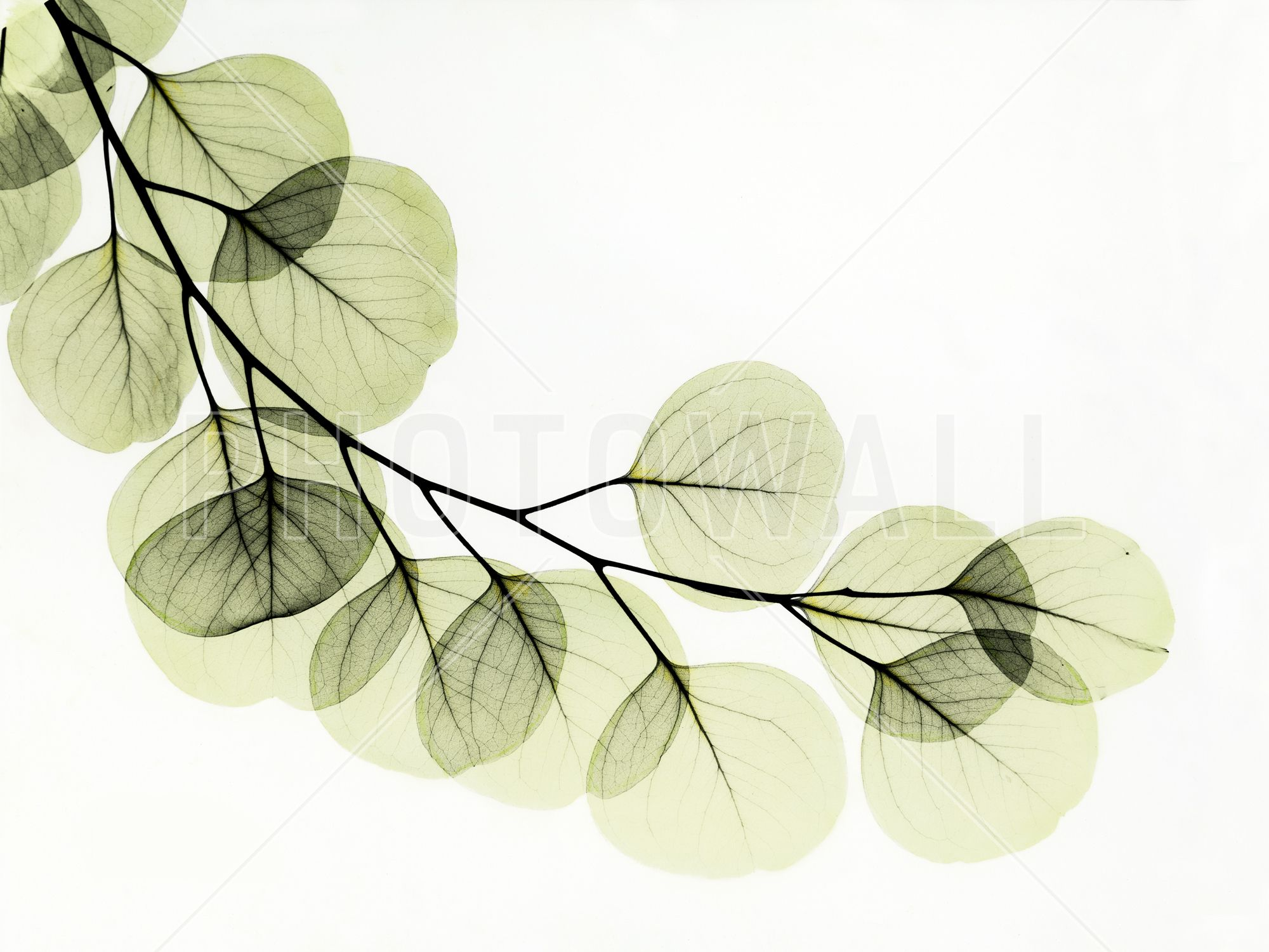 Xray Flower Prints Eucalyptus Fototapeten And Tapeten Photowall Tapeten