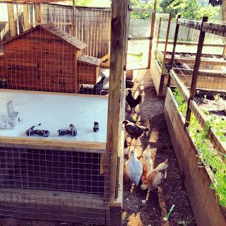 Cool Coops! ~ The Beach Shack -- Community Chickens