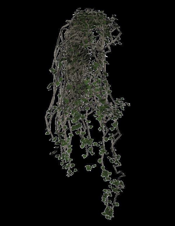 Common Grape Vine Portable Network Graphics Ivy Grape Transparent Background Png Clipart Grape Tree Creepers Plants Plants