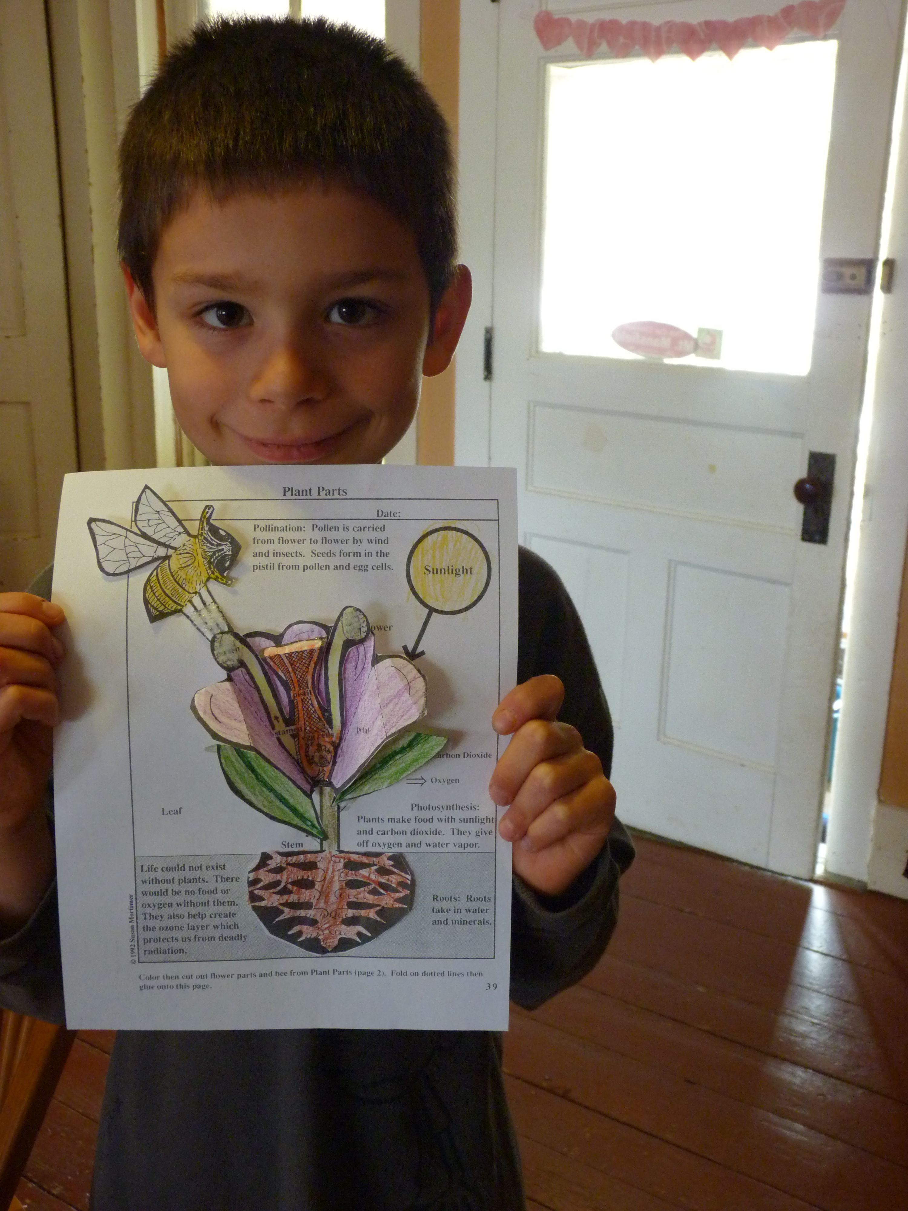 We Put Together A Paper Flower Showing Plant Anatomy And