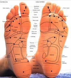 partes del cuerpo en la planta delos pies - Buscar con Google
