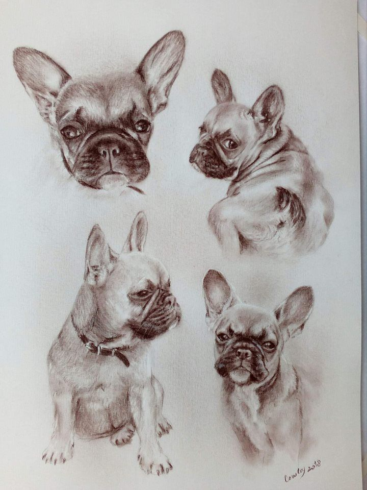 Pin By Heather Winkler On Frenchies 3 French Bulldog French